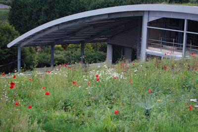 Sky Garden Wildflower Roof