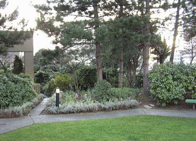 intensive roof garden